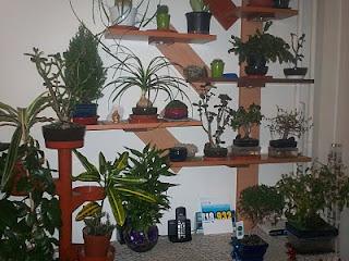 bonsai_1