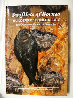 Swiftlet Of Borneo