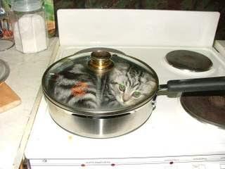 cat eater
