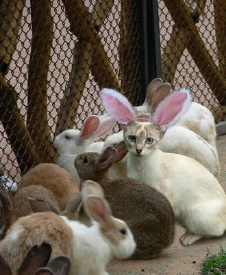 the cat in a rabbit dress