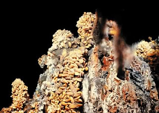 Deep Sea Vents or Hydrothermal Vents
