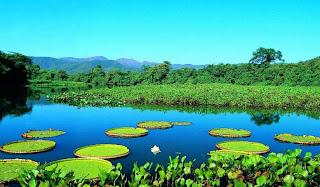 pantanal swamp brazil