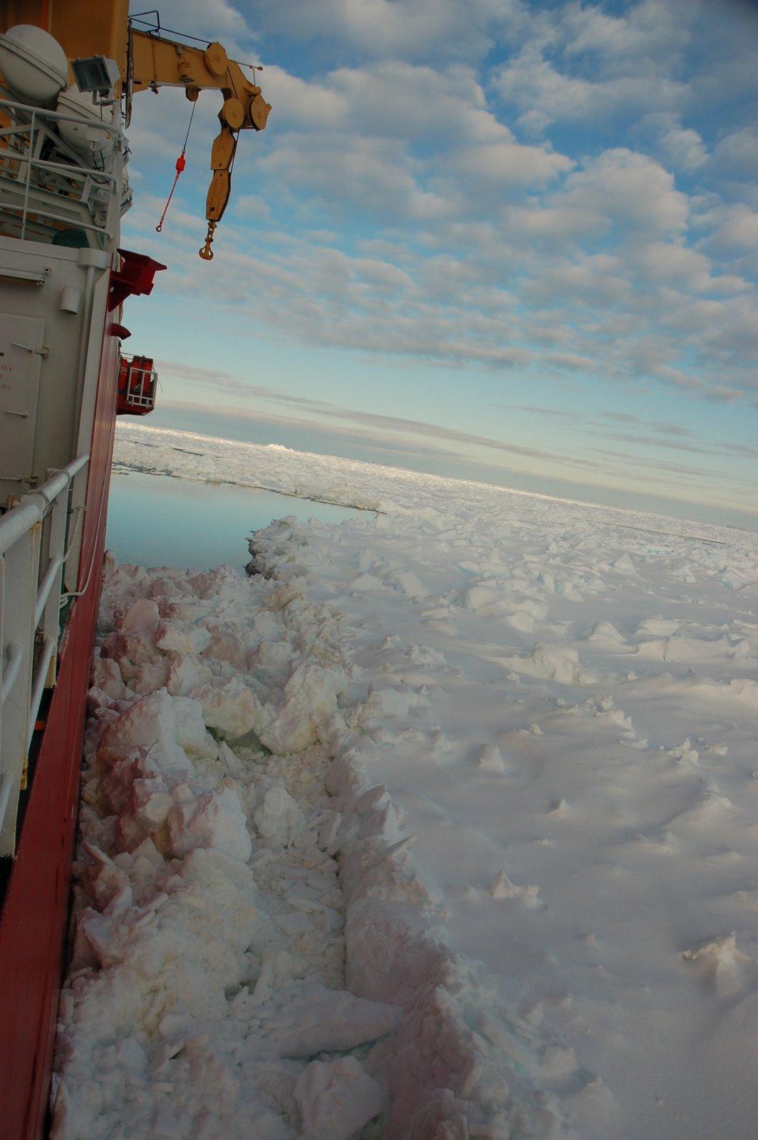 [Antarctica]