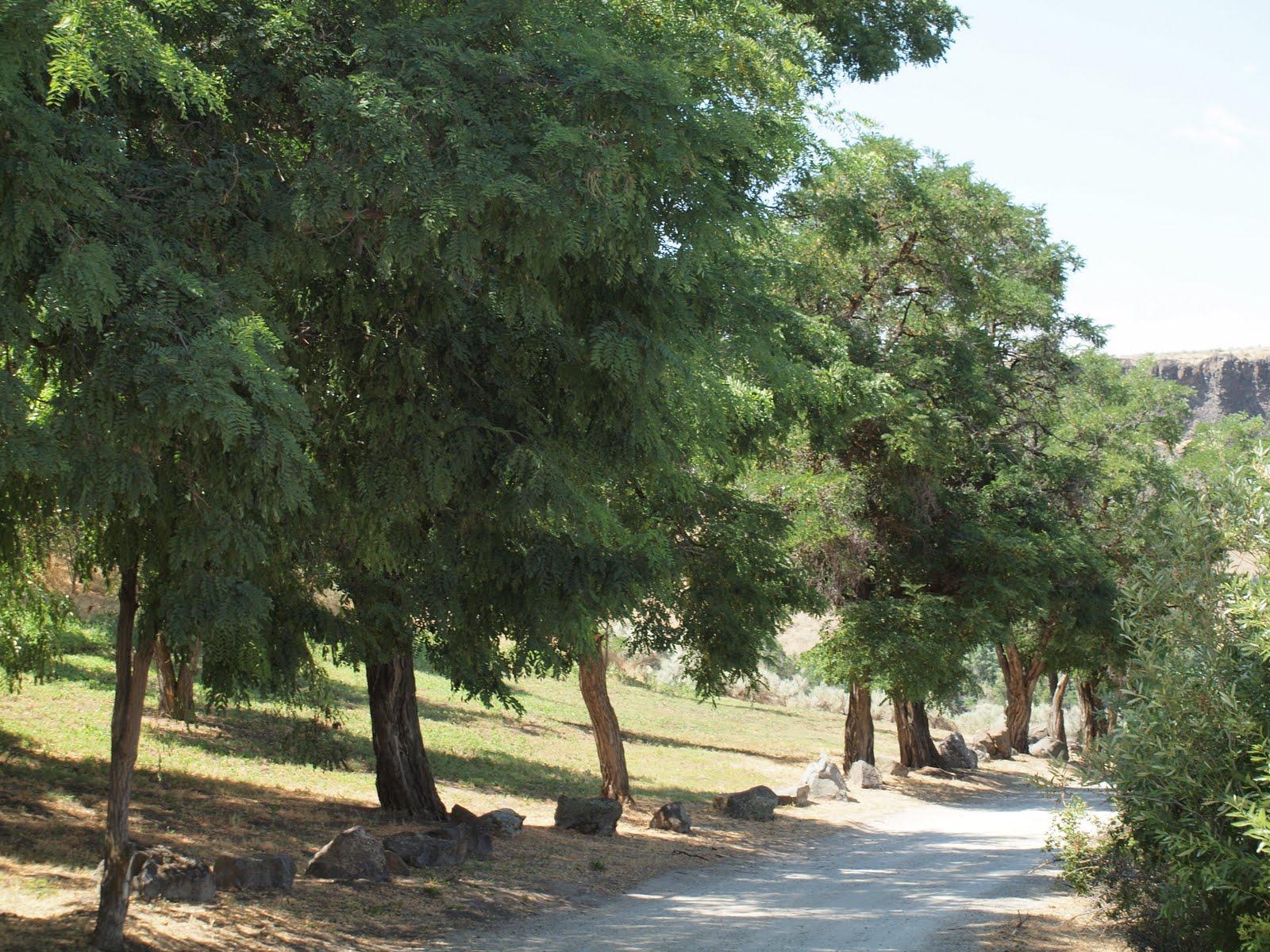 http://4.bp.blogspot.com/_bOKmjbY7wEo/TIWdFqwqemI/AAAAAAAADaA/8BrG_WNCkdg/s1600/Foote+Park.JPG
