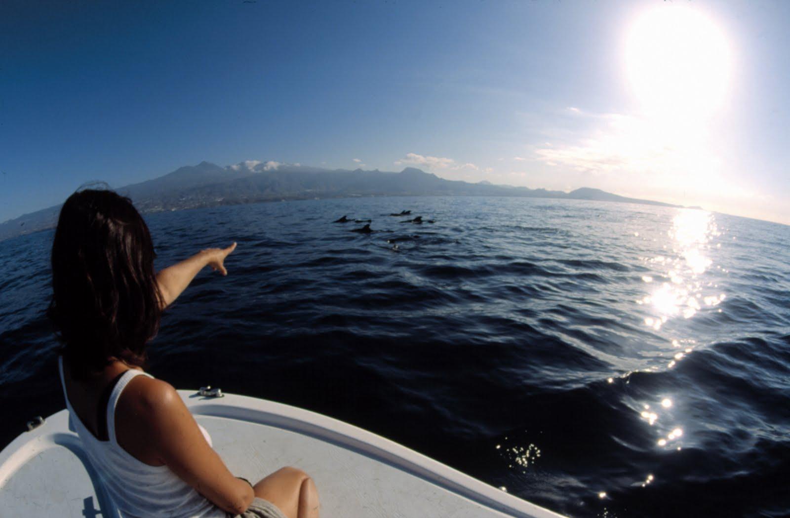 Avistamiento Cetáceos Tenerife