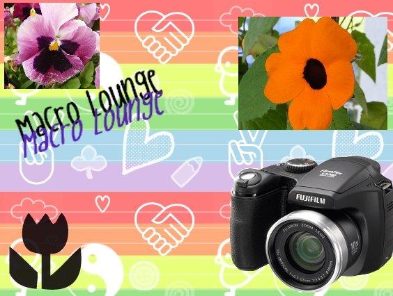Macro Lounge