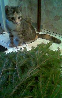 Choinkowy kot