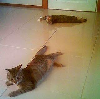 Przygód kilka kota świrka