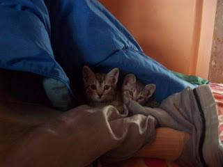 Pralinek i Trufelek szukają domu