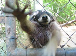 Day By Day & Thought By Thought: Electrocuted, Brain Tumor ... Raccoon With Rabies Foaming