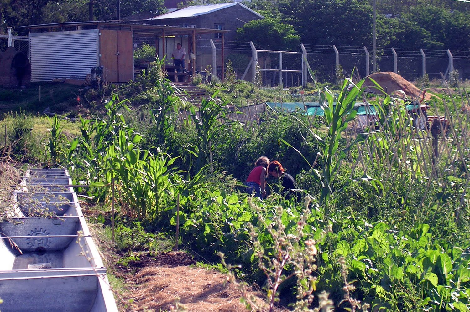 the right to urban agriculture in rosario argentina