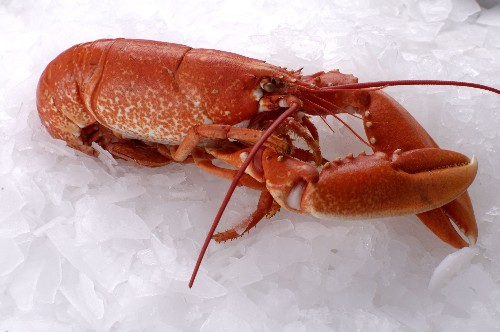 Pictures of maine lobsters / [do lobsters live in hawaii]