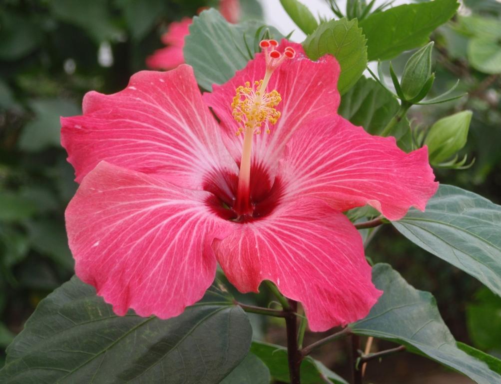 Zeke 39 s bilingual blog muchas flores bonitas - Rosas rosas hermosas ...