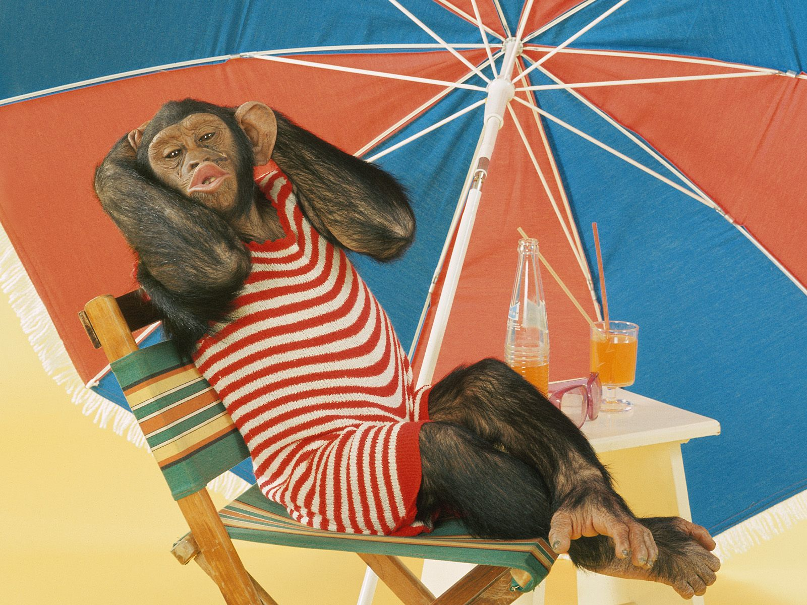 World Records A Beach Monkey In Easy Chair