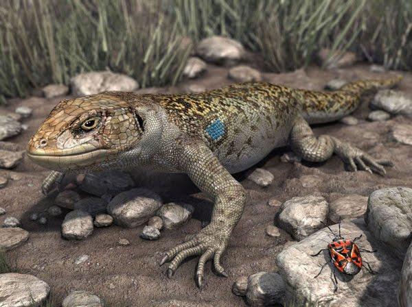 Lizard bug 3d