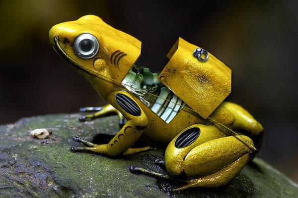Cyber Frog by Marek