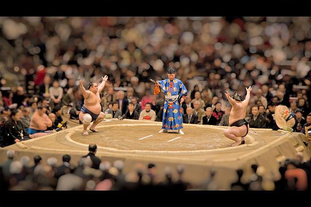 toy sumo