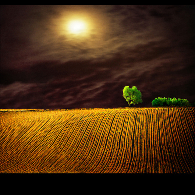 Moon field