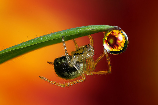 Flower dewdrop refraction