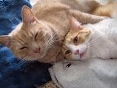 Timmy & Sunny