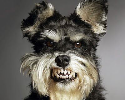 funny dogs: funny dogs wallpapers angry