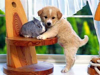cute dog pictures: cute dog with rabbit