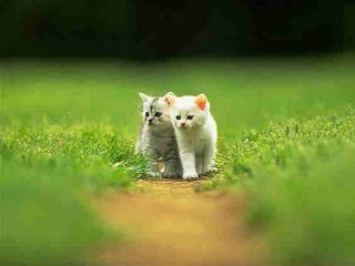 go to Cute Cat Pictures: Cats - Cute cat couple