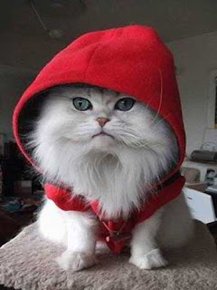 go to Cute Cats Pictures: Cats - white cat with hat