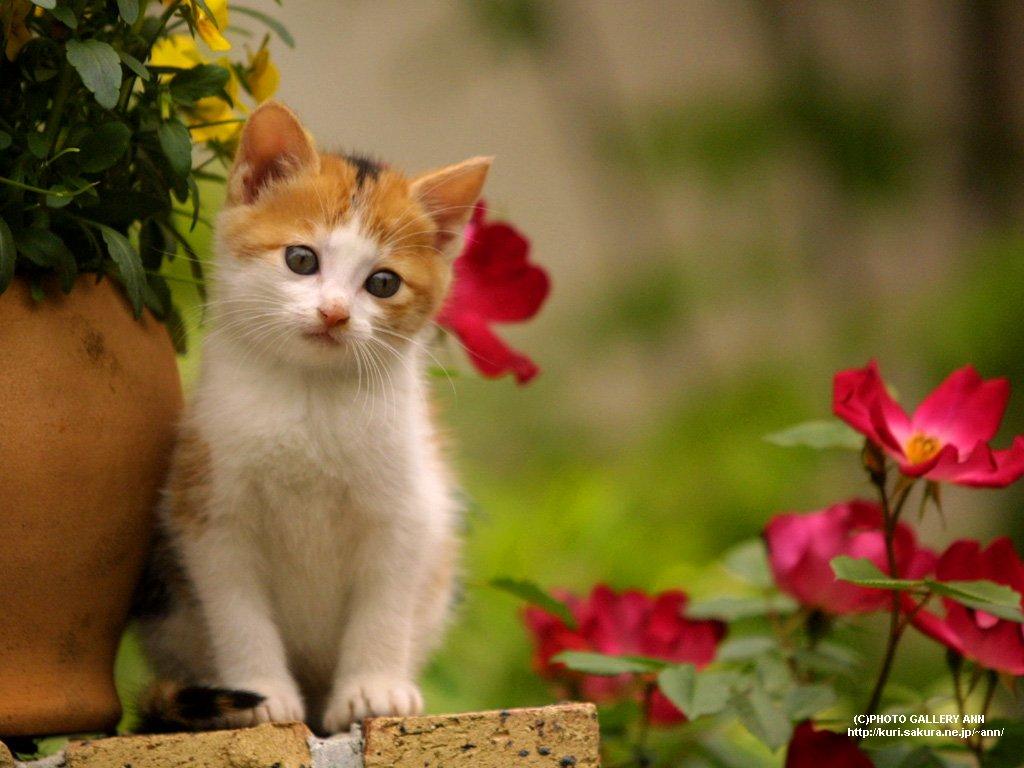 http://4.bp.blogspot.com/_bXO9Zcn0xXs/TFvmat2gW6I/AAAAAAAAAD4/TPuEzs9fjVc/s1600/cats-1.jpg