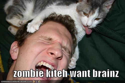funny zombie. Funny Flames : Zombie Kittehs!