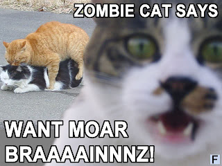Funny Flames Zombie Kittehs