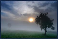 Misty Day.