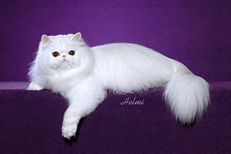 Kucing - Kucing Imut