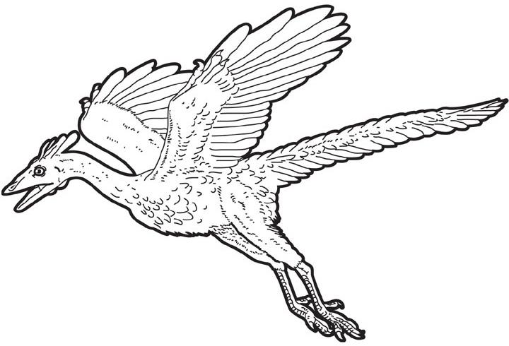 [archaeopteryx.jpg]