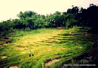 DIJUAL tanah pertanian seluas 21.500 meter persegi