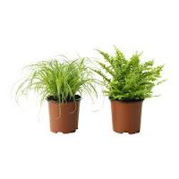 Cultivar as suas Próprias Plantas