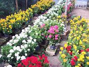 CORES DA PRIMAVERA * As cores da primavera. Ornamentam a estação.