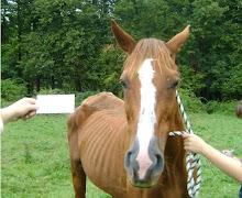 Trupia Horse