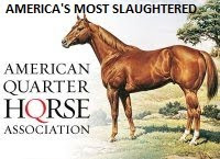 Are You a Member of AQHA?