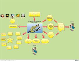 Diagrama del Desarrollo de Habilidades Informativas