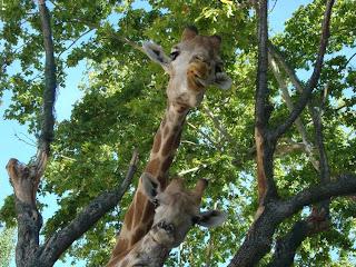 Lisboa: Jardim Zoológico