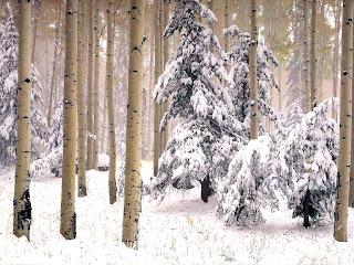 copaci in anotimpul iarna