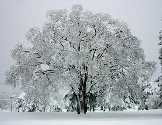 copaci frumosi la avatar