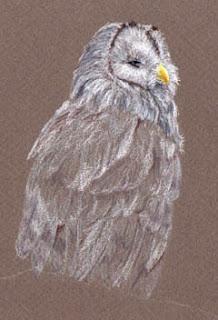 Ural Owl By Jennifer Phillip
