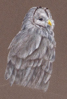 Ural Owl By Jennifer Phillip