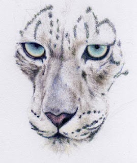 Coloured Snow Leopard by Jennifer Rose Phillip