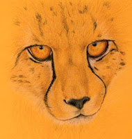cheetah Copyright Jennifer Rose Phillip
