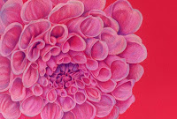 Dahlia drawing in coloured pencil copyright Jennifer rose phillip