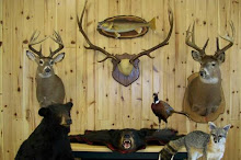 SKINSANDFINS TAXIDERMY