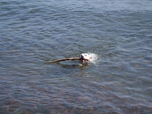 SWIMMING IN LAKE SUPERIOR